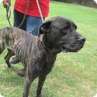 Adopt A Pet :: Hercules - Lufkin, TX