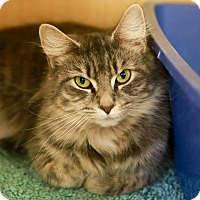 Adopt A Pet :: Khloe - Kettering, OH