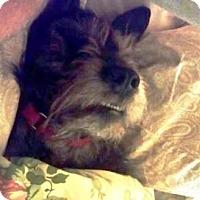 Adopt A Pet :: DOZER (SRC#1736) IN NC - Lenoir, NC