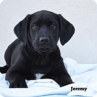 Adopt A Pet :: Jeremy - Old Saybrook, CT