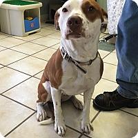 Adopt A Pet :: Annie - Chippewa Falls, WI
