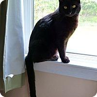 Adopt A Pet :: PENNY aka Penelope - Hamilton, NJ