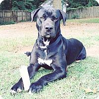 Adopt A Pet :: George - Dallas, GA