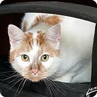 Adopt A Pet :: Milo - Sherwood, OR