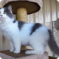 Adopt A Pet :: Miss Fit - Van Wert, OH