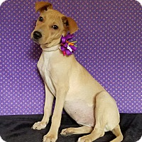 Adopt A Pet :: Callie - Pluckemin, NJ