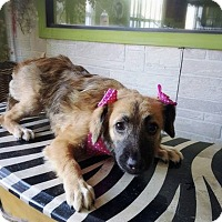 Adopt A Pet :: ALEXA - Eastsound, WA
