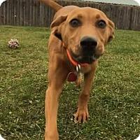 Adopt A Pet :: Kobe - Fort Atkinson, WI