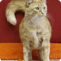 Adopt A Pet :: Janis-$50 adopt - South Bend, IN