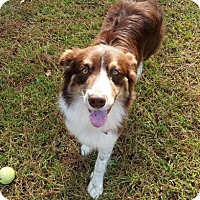Adopt A Pet :: Jazz Man - Freeport, FL