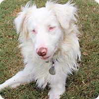 Adopt A Pet :: Zonder - FOSTER, RI