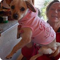 Adopt A Pet :: Tina - Yucaipa, CA