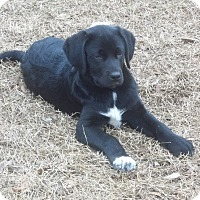 Adopt A Pet :: Clarence adoption pending - Manchester, CT