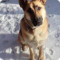 Adopt A Pet :: Esmae - Raleigh, NC