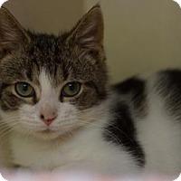 Adopt A Pet :: Theo - Lancaster, PA