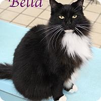 Adopt A Pet :: Bella - Bradenton, FL