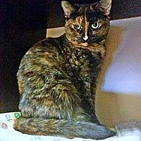 Adopt A Pet :: Cinnamon - Richmond Hill, ON