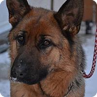 Adopt A Pet :: ZOE - Winnipeg, MB