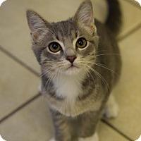 Adopt A Pet :: Aidan - DFW Metroplex, TX