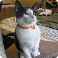Adopt A Pet :: Ernest - Faribault, MN
