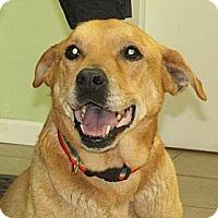 Adopt A Pet :: Winnie - Greeley, CO