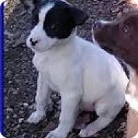 Adopt A Pet :: Moon - Staunton, VA