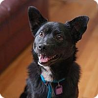 Adopt A Pet :: Breeze - Saskatoon, SK