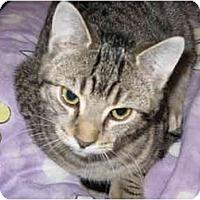 Adopt A Pet :: Fiona - Markham, ON