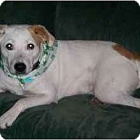 Adopt A Pet :: *Lucky - Winder, GA