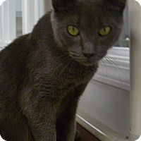 Adopt A Pet :: Sarah - Hamburg, NY
