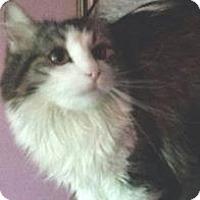 Adopt A Pet :: Ginger - Ennis, TX