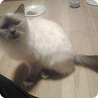 Adopt A Pet :: Skyler - Acme, PA