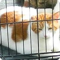 Adopt A Pet :: JK - Acme, PA