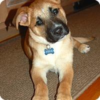 Adopt A Pet :: *Jennings - PENDING - Westport, CT
