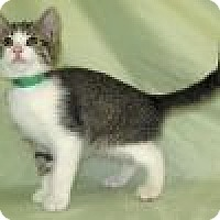 Adopt A Pet :: Karlos - Powell, OH