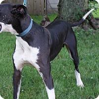 Adopt A Pet :: Zeus - Baden, PA
