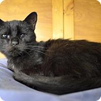 Adopt A Pet :: Myra - Queens, NY