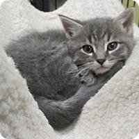 Adopt A Pet :: Charlotte - Brockton, MA