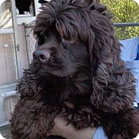 Adopt A Pet :: Buttercup - Crump, TN
