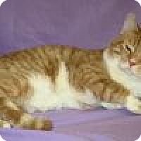 Adopt A Pet :: Jaspurr - Powell, OH