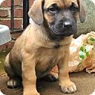 Adopt A Pet :: Babe Cordelia