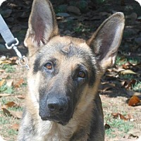 Adopt A Pet :: Joey - Holly Hill, SC
