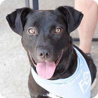Labrador Retriever Mix Dog for adoption in Nashville, Tennessee - Boca