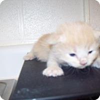 Adopt A Pet :: Peach - Gulfport, MS