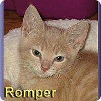 Adopt A Pet :: Romper - Aldie, VA