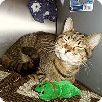 Adopt A Pet :: BROGAN - Medford, WI