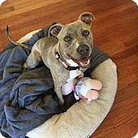 Adopt A Pet :: Jilly - San Diego, CA