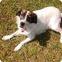 Adopt A Pet :: Buster - GREENLAWN, NY