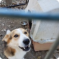 Adopt A Pet :: Jimmy - Walthill, NE
