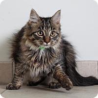 Adopt A Pet :: Margarita C160377 - Edina, MN